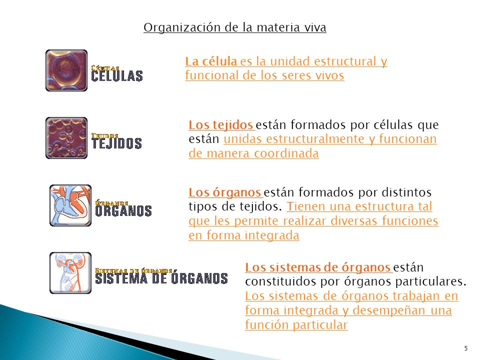 Organización de la materia viva