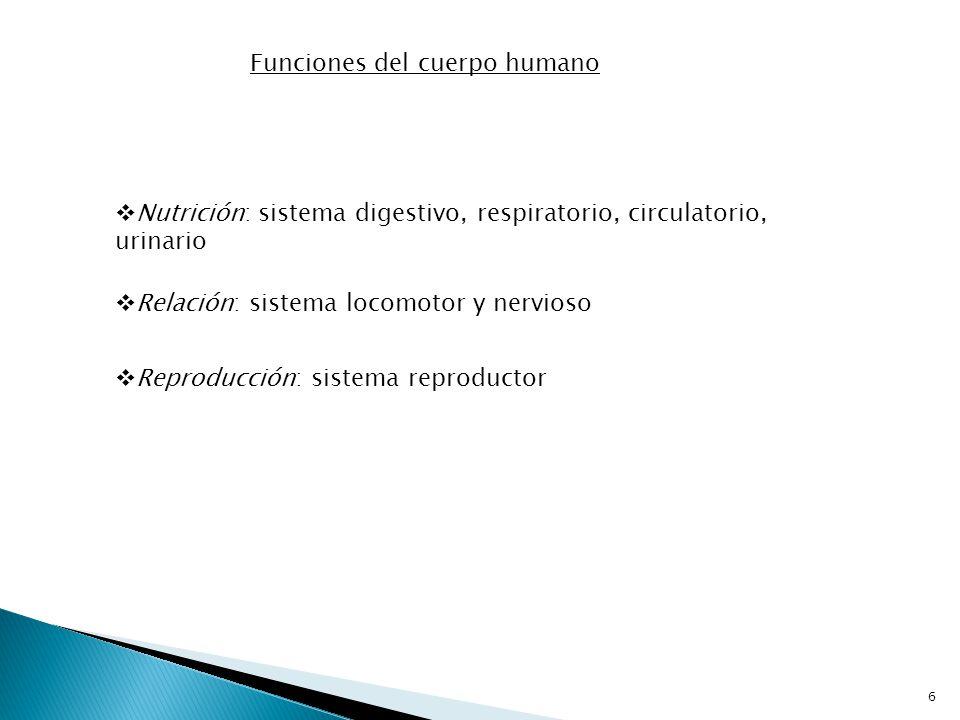 Funciones del cuerpo humano