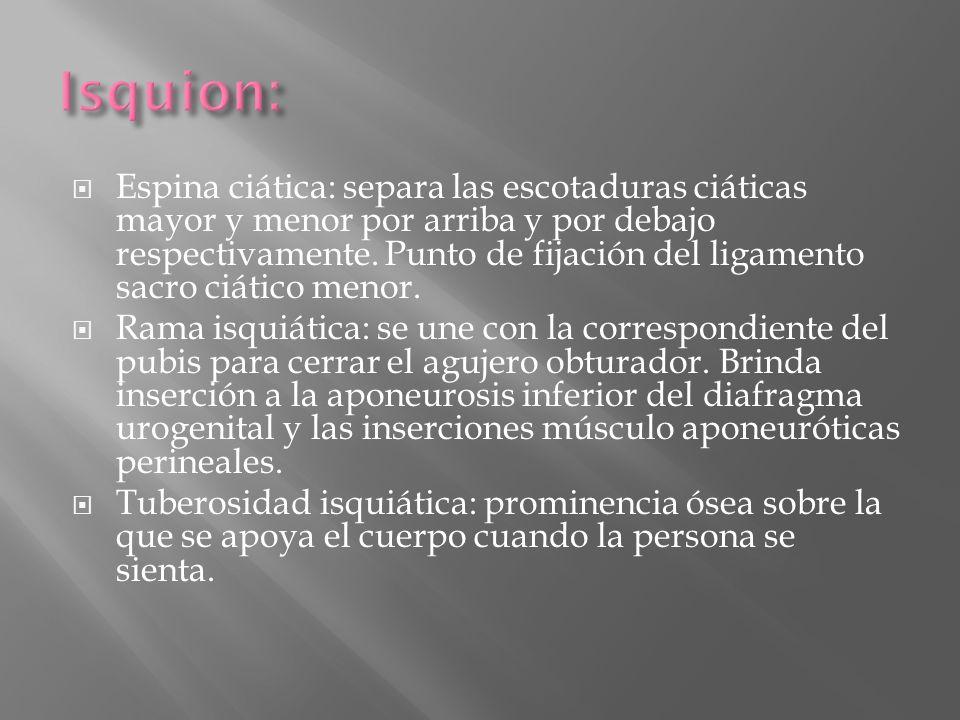 Isquion: