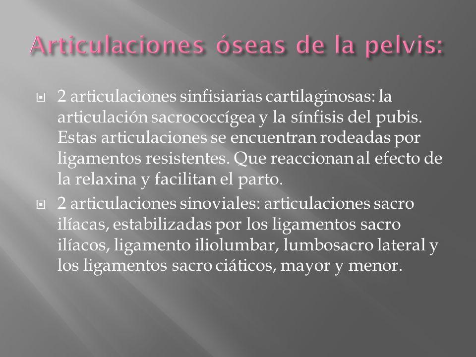 Articulaciones óseas de la pelvis: