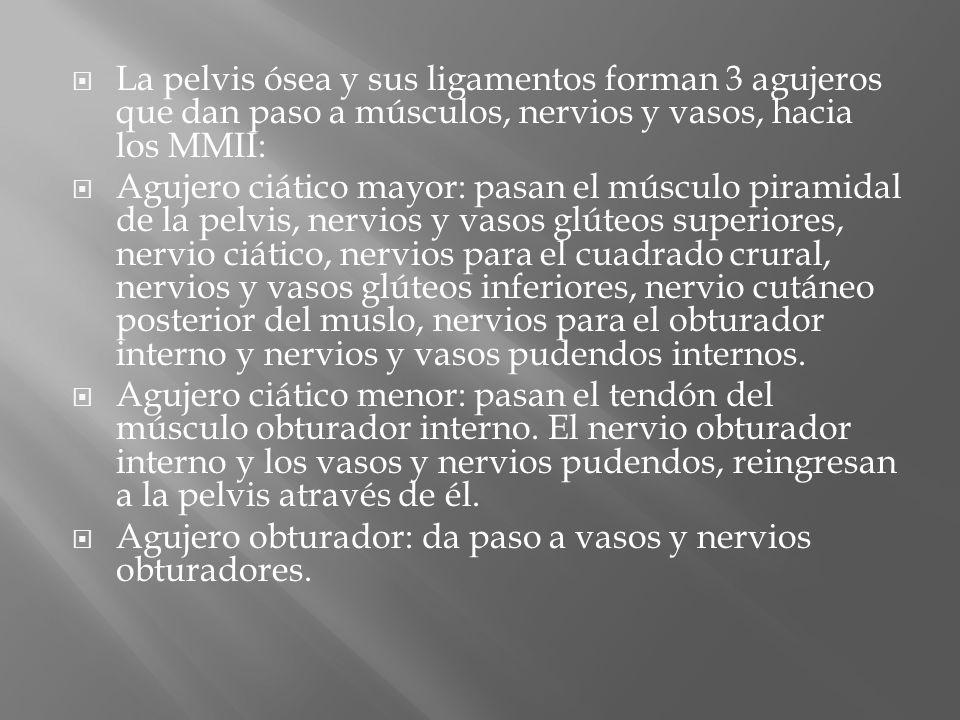 La pelvis ósea y sus ligamentos forman 3 agujeros que dan paso a músculos, nervios y vasos, hacia los MMII:
