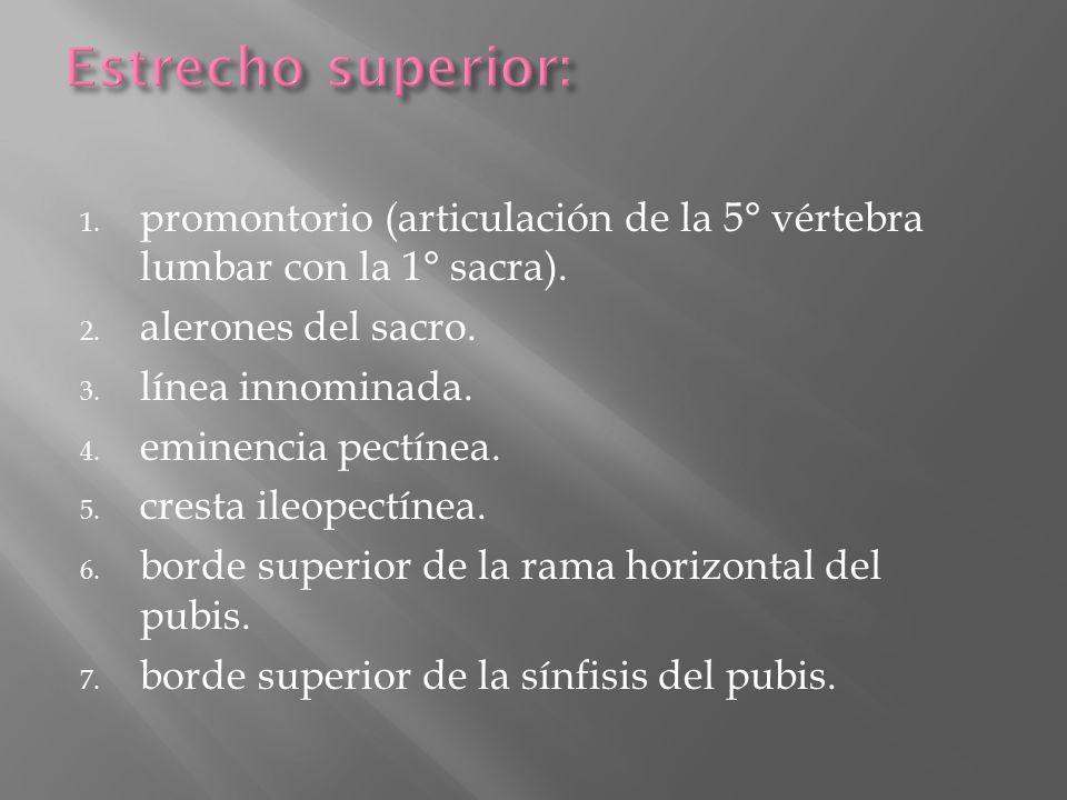 Estrecho superior: promontorio (articulación de la 5° vértebra lumbar con la 1° sacra). alerones del sacro.