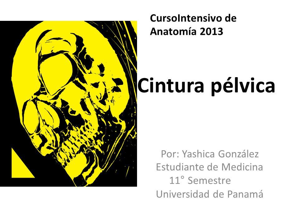 Cintura pélvica CursoIntensivo de Anatomía 2013 Estudiante de Medicina