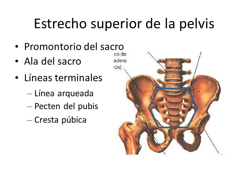 Estrecho superior de la pelvis