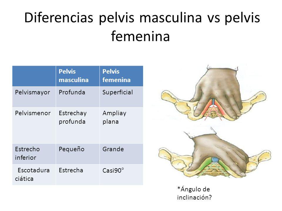 Diferencias pelvis masculina vs pelvis femenina