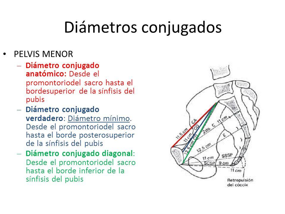 Diámetros conjugados • PELVIS MENOR – Diámetro conjugado