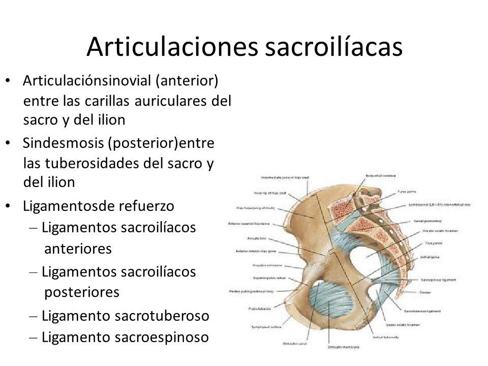 Articulaciones sacroilíacas