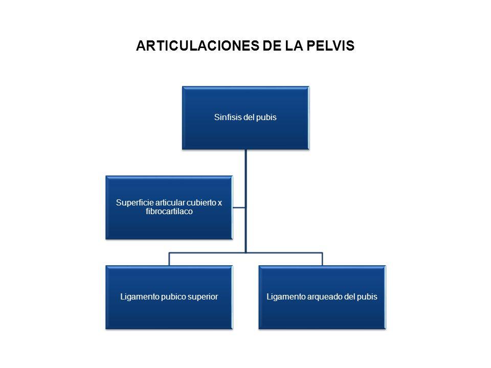 ARTICULACIONES DE LA PELVIS