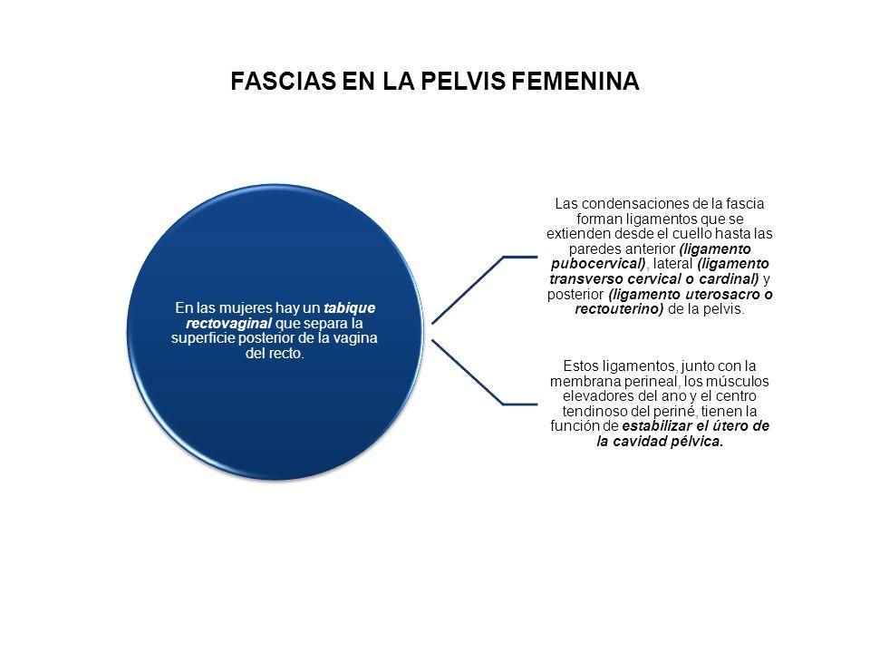 FASCIAS EN LA PELVIS FEMENINA
