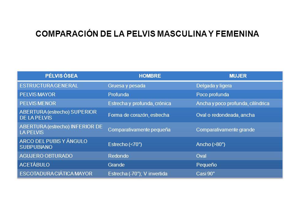 COMPARACIÓN DE LA PELVIS MASCULINA Y FEMENINA