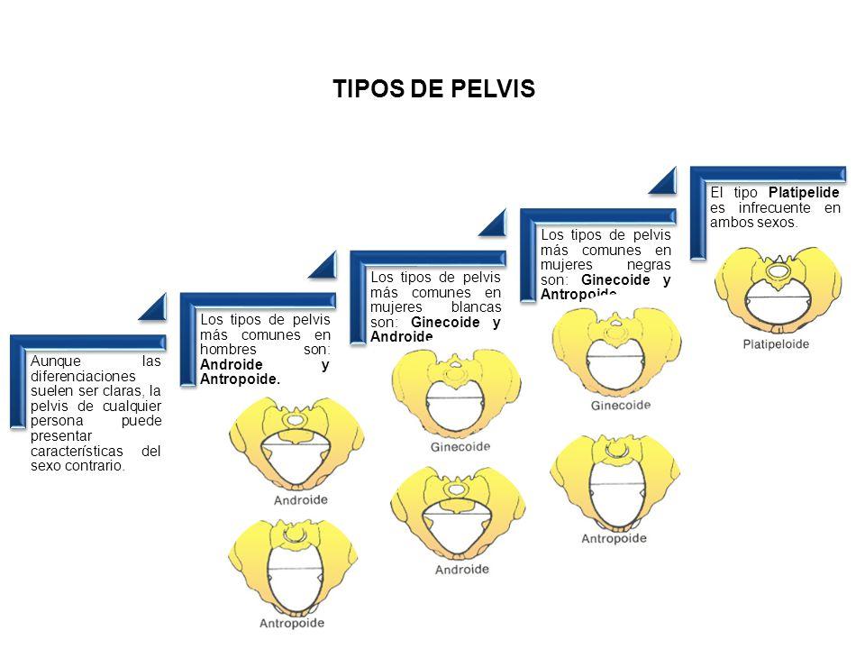 TIPOS DE PELVIS Aunque las diferenciaciones suelen ser claras, la pelvis de cualquier persona puede presentar características del sexo contrario.