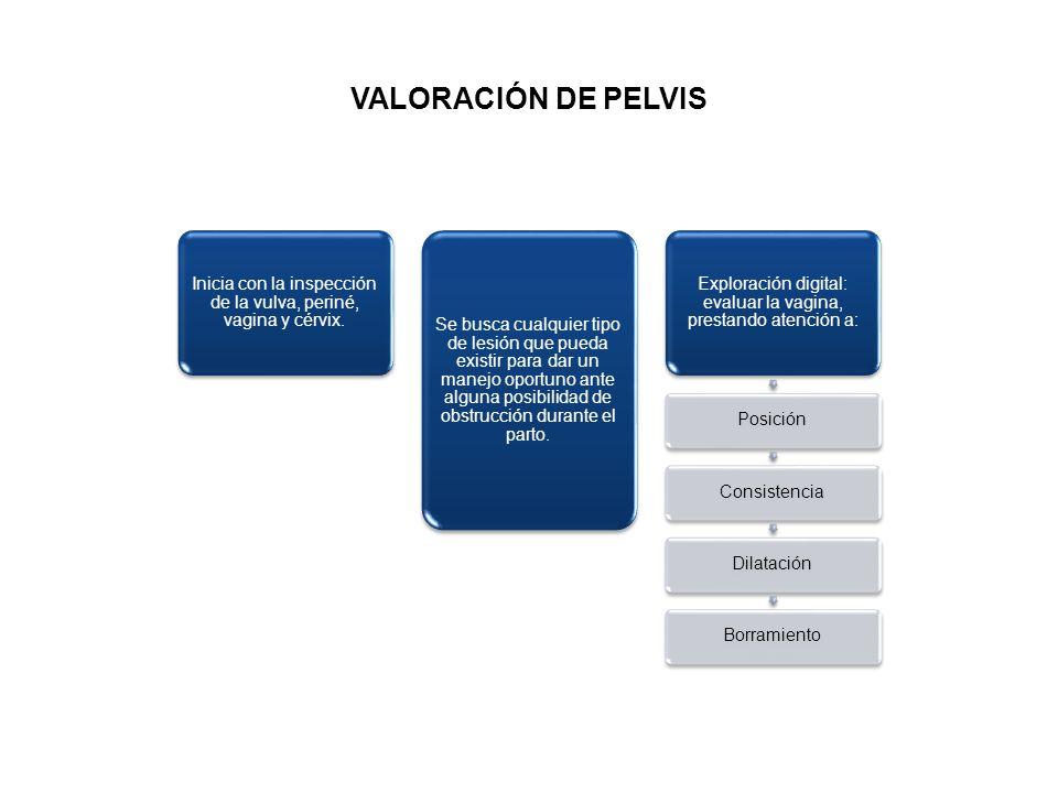 VALORACIÓN DE PELVIS Inicia con la inspección de la vulva, periné, vagina y cérvix.