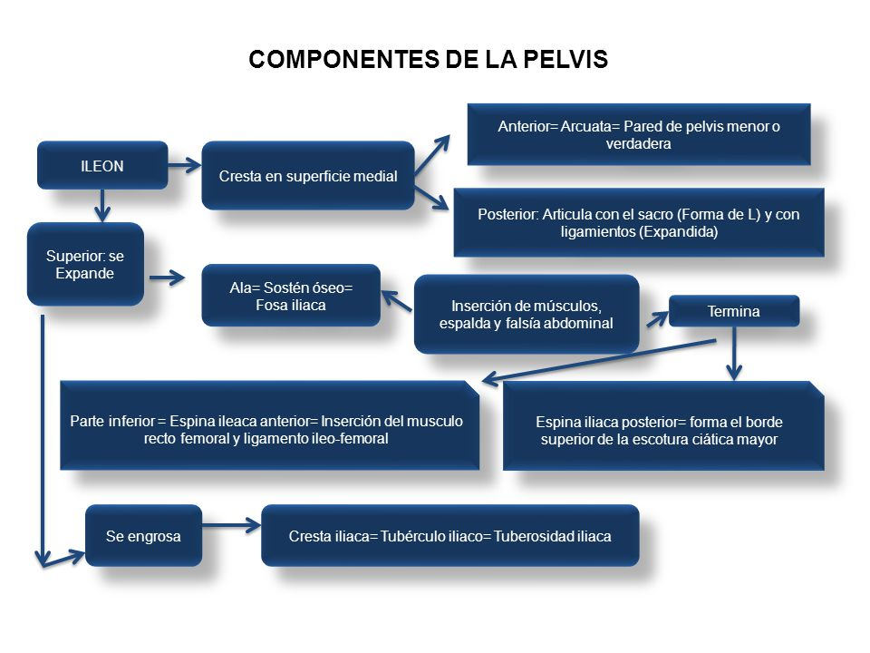 COMPONENTES DE LA PELVIS