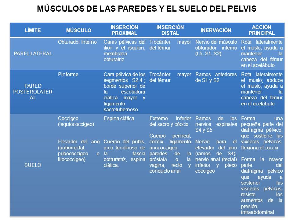 MÚSCULOS DE LAS PAREDES Y EL SUELO DEL PELVIS