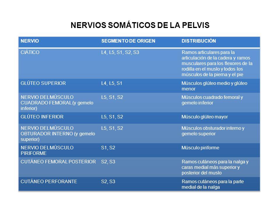 NERVIOS SOMÁTICOS DE LA PELVIS