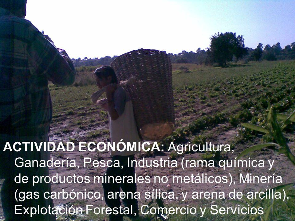 ACTIVIDAD ECONÓMICA: Agricultura, Ganadería, Pesca, Industria (rama química y de productos minerales no metálicos), Minería (gas carbónico, arena sílica, y arena de arcilla), Explotación Forestal, Comercio y Servicios