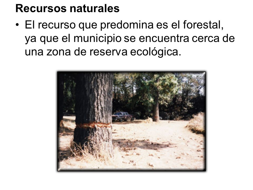 Recursos naturales El recurso que predomina es el forestal, ya que el municipio se encuentra cerca de una zona de reserva ecológica.