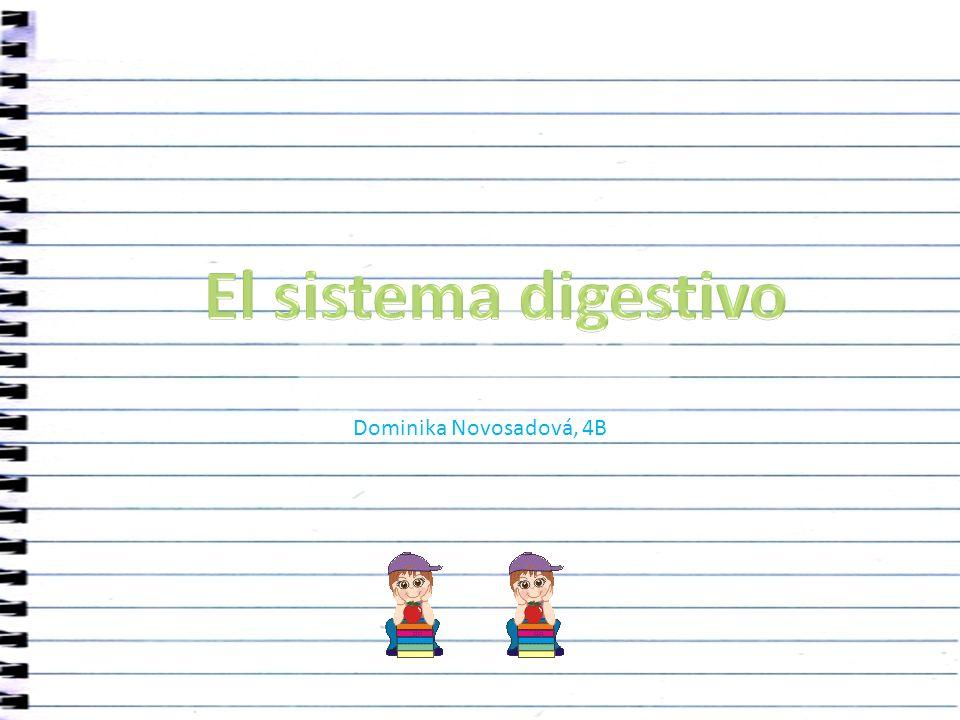 El sistema digestivo Dominika Novosadová, 4B