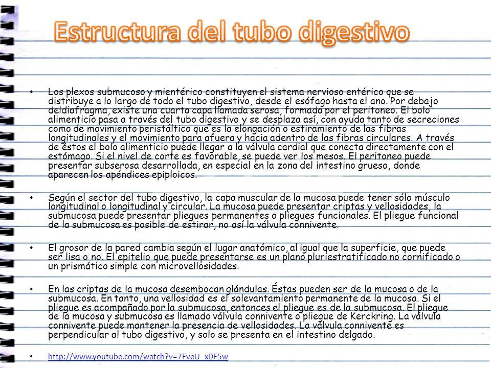 Estructura del tubo digestivo