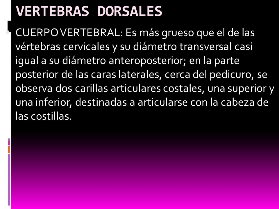 VERTEBRAS DORSALES