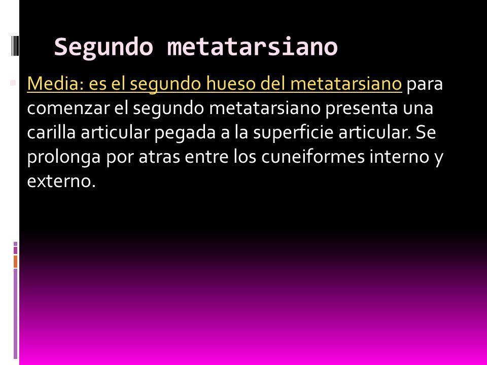Segundo metatarsiano