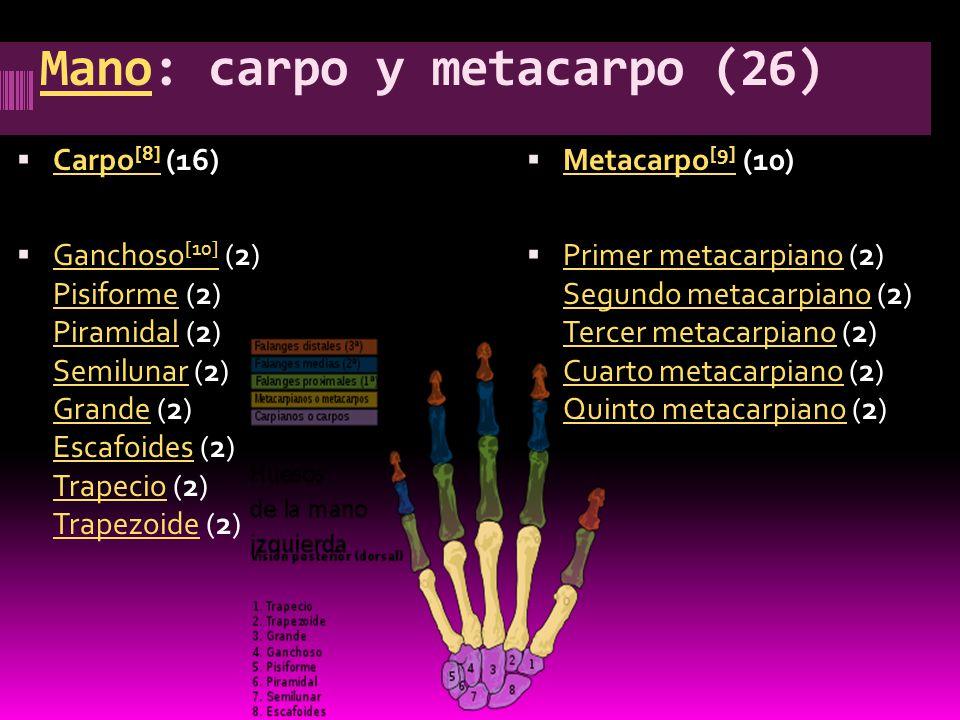 Mano: carpo y metacarpo (26)