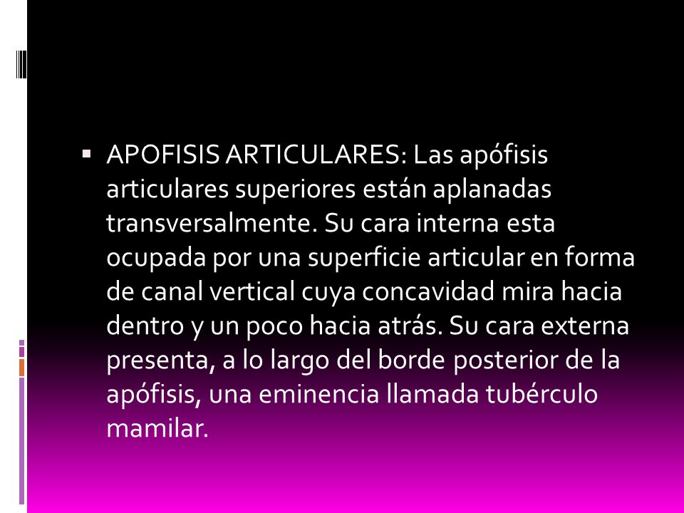APOFISIS ARTICULARES: Las apófisis articulares superiores están aplanadas transversalmente.
