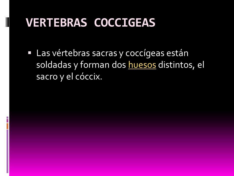 VERTEBRAS COCCIGEAS Las vértebras sacras y coccígeas están soldadas y forman dos huesos distintos, el sacro y el cóccix.
