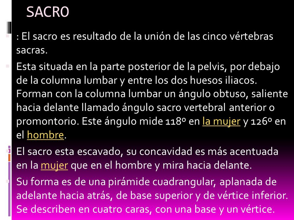 SACRO : El sacro es resultado de la unión de las cinco vértebras sacras.