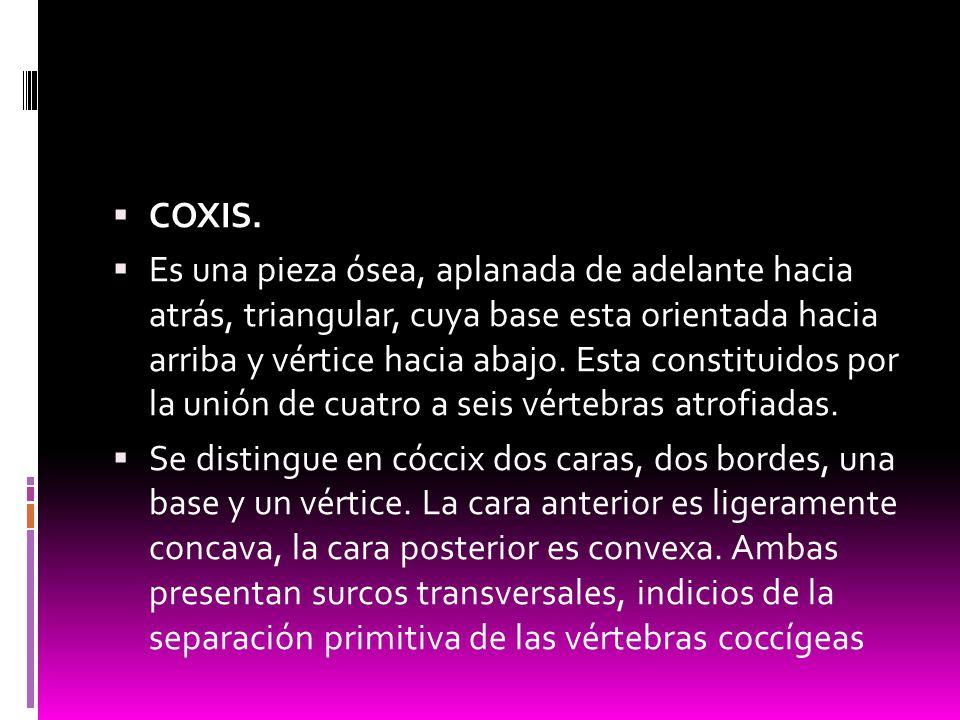 COXIS.