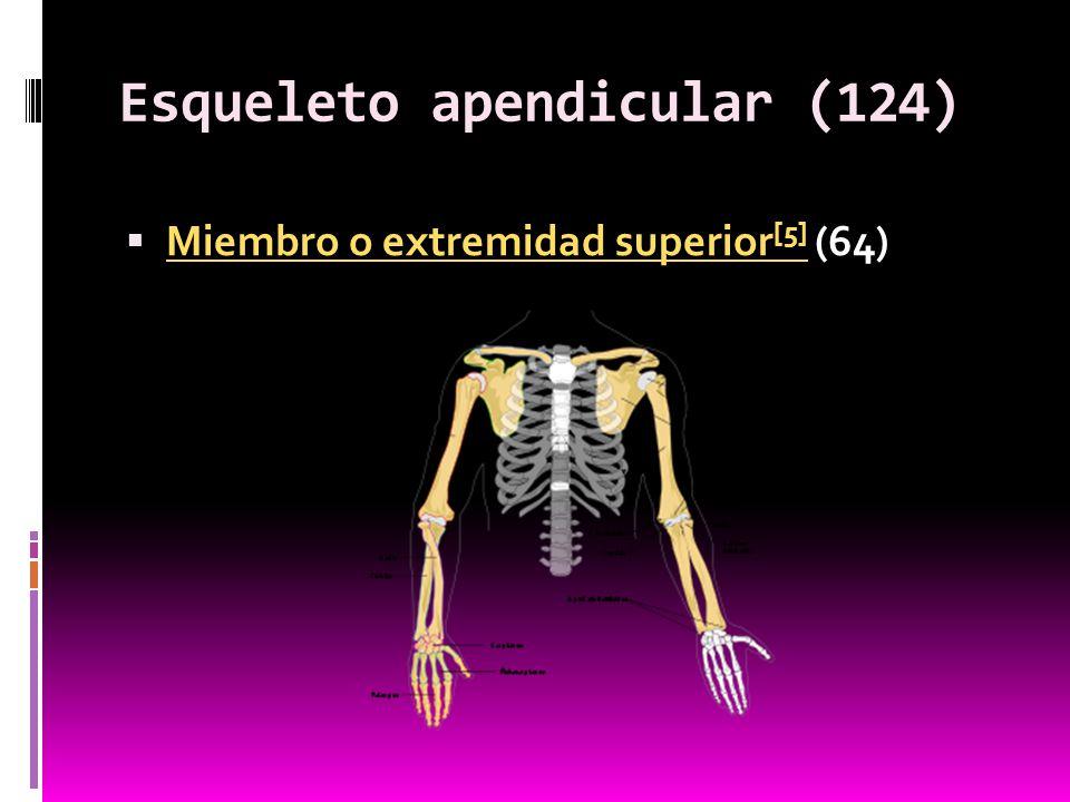 Esqueleto apendicular (124)