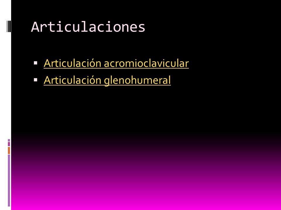 Articulaciones Articulación acromioclavicular