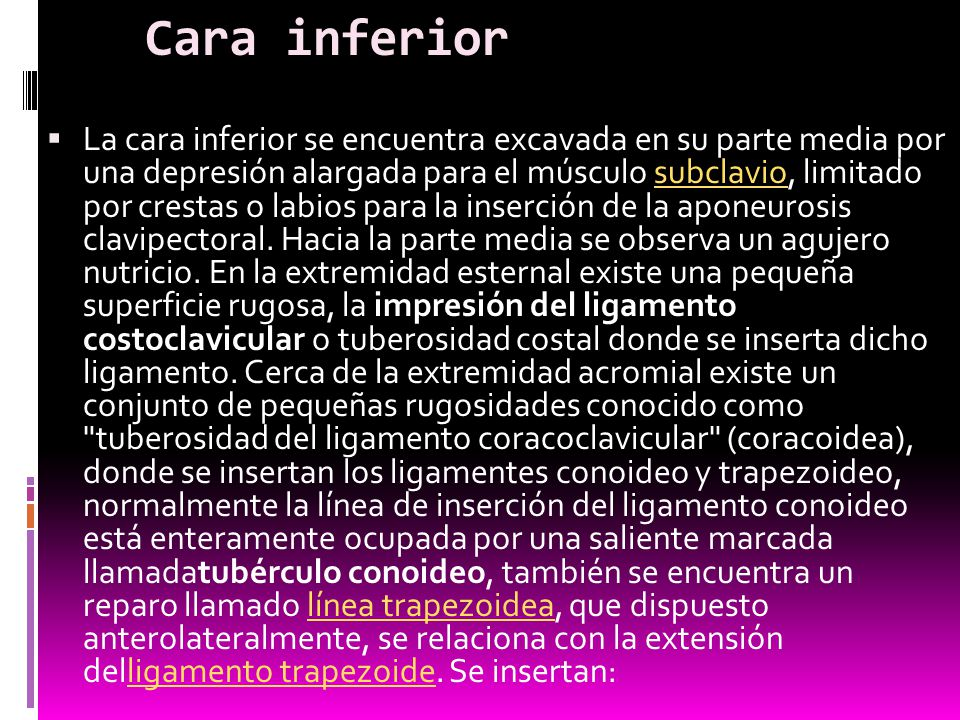 Cara inferior