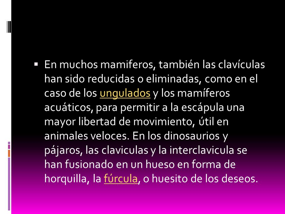 En muchos mamiferos, también las clavículas han sido reducidas o eliminadas, como en el caso de los ungulados y los mamíferos acuáticos, para permitir a la escápula una mayor libertad de movimiento, útil en animales veloces.