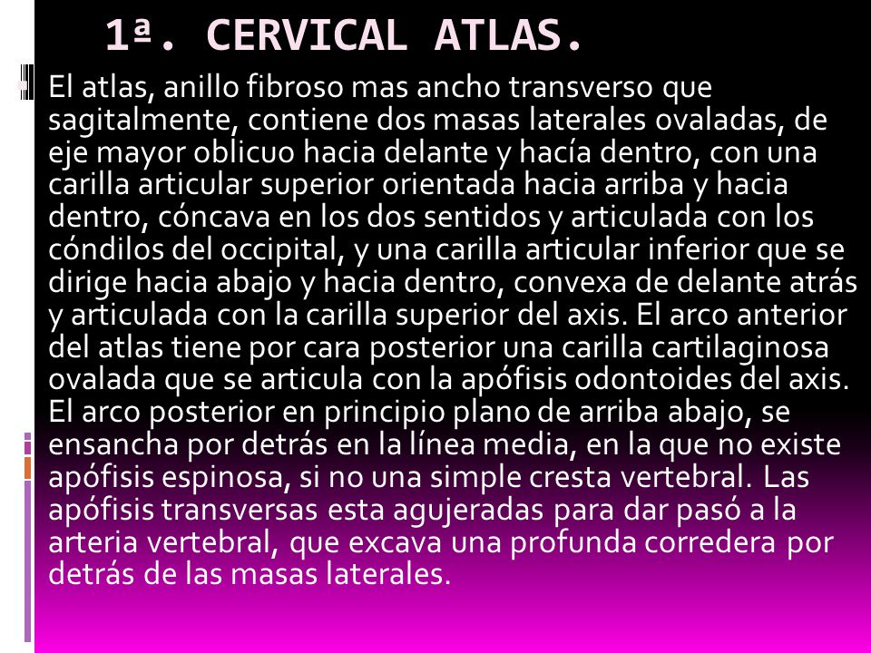 1ª. CERVICAL ATLAS.