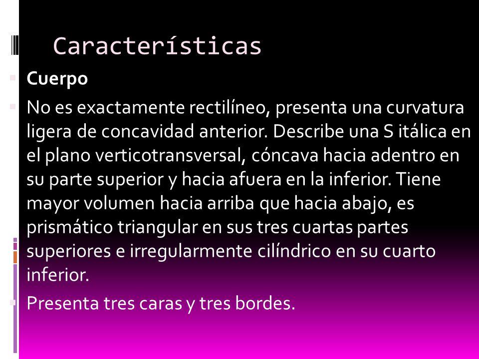 Características Cuerpo