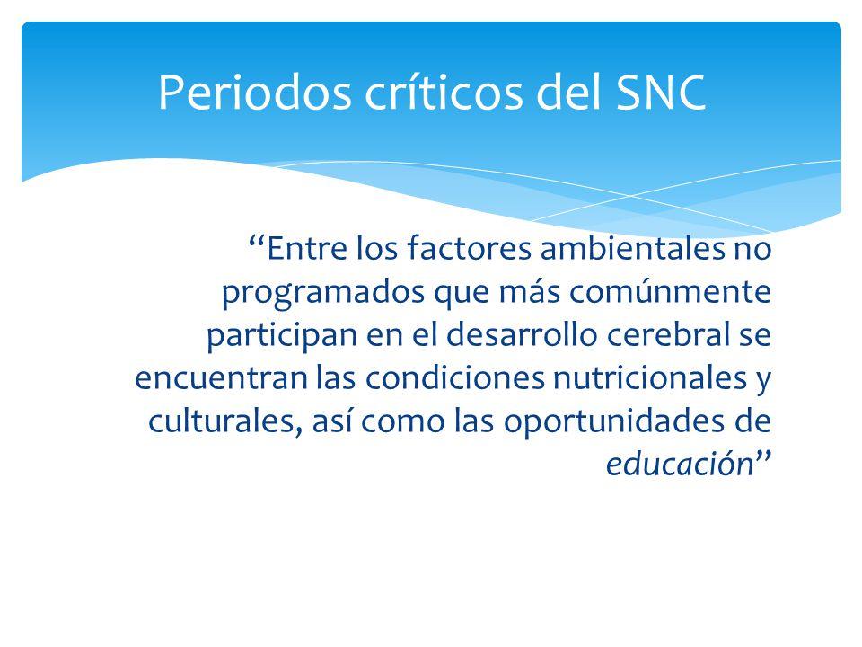 Periodos críticos del SNC