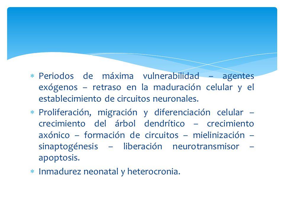 Periodos de máxima vulnerabilidad – agentes exógenos – retraso en la maduración celular y el establecimiento de circuitos neuronales.