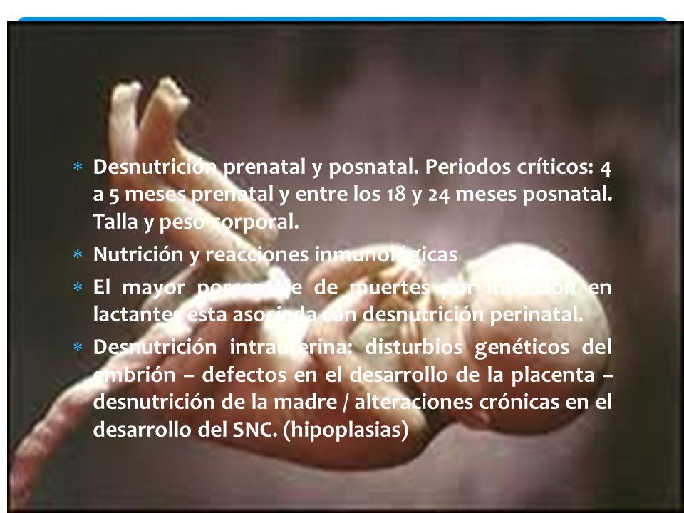 Desnutrición prenatal y posnatal