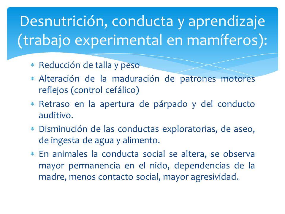 Desnutrición, conducta y aprendizaje (trabajo experimental en mamíferos):