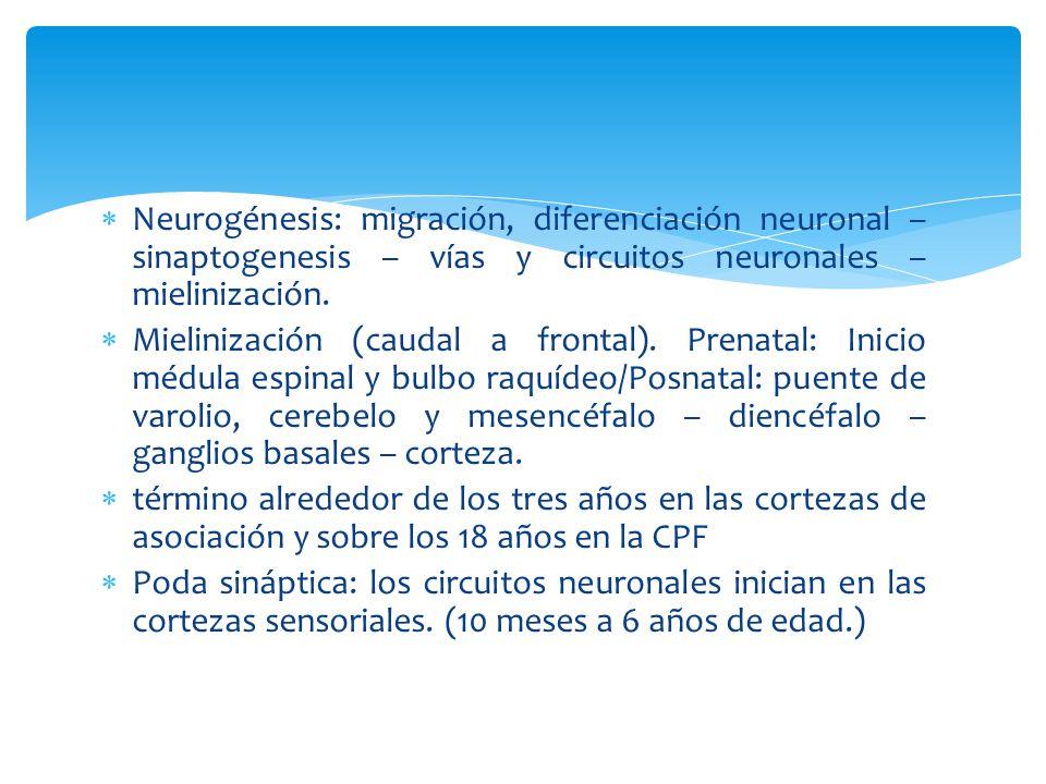 Neurogénesis: migración, diferenciación neuronal – sinaptogenesis – vías y circuitos neuronales – mielinización.