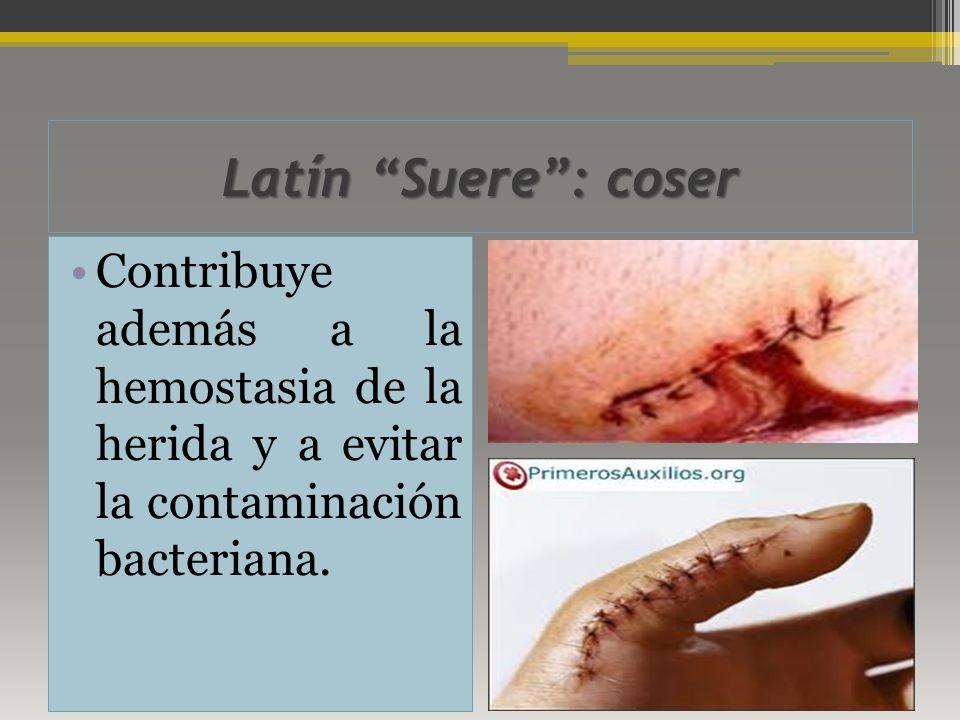 Latín Suere : coser Contribuye además a la hemostasia de la herida y a evitar la contaminación bacteriana.
