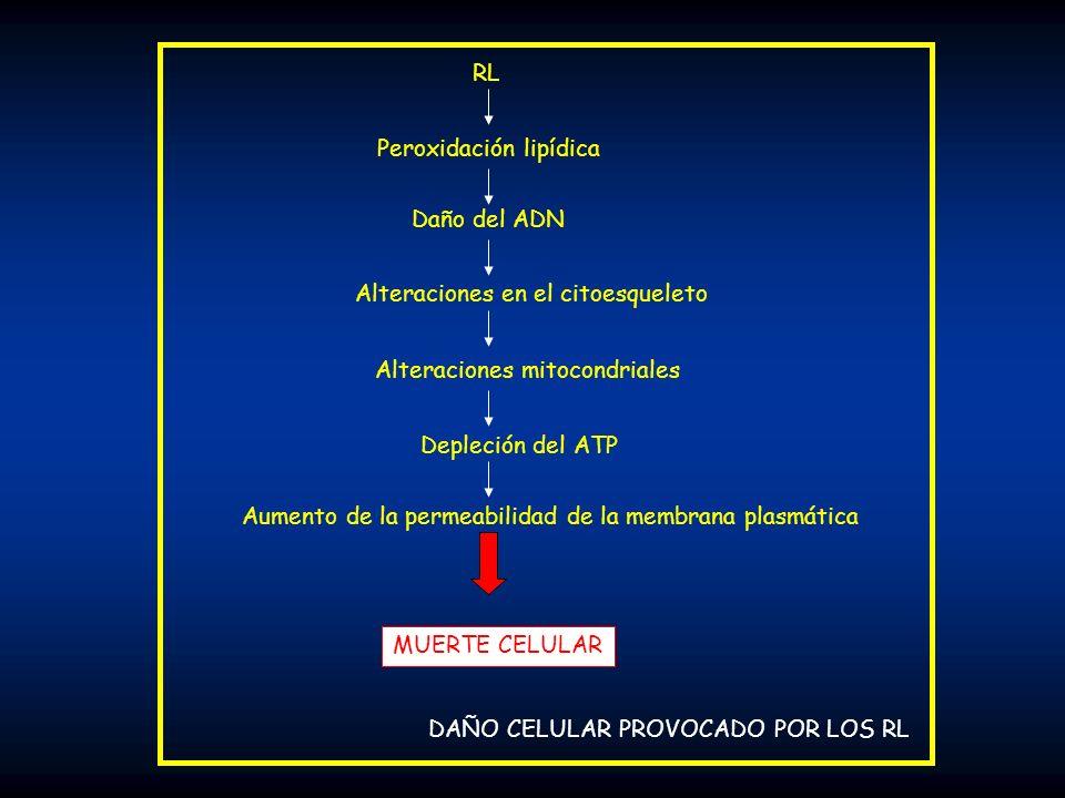 RL Peroxidación lipídica. Daño del ADN. Alteraciones en el citoesqueleto. Alteraciones mitocondriales.