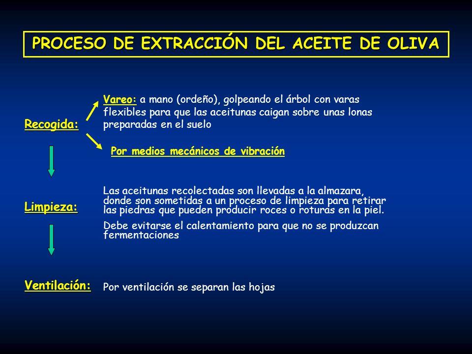 PROCESO DE EXTRACCIÓN DEL ACEITE DE OLIVA