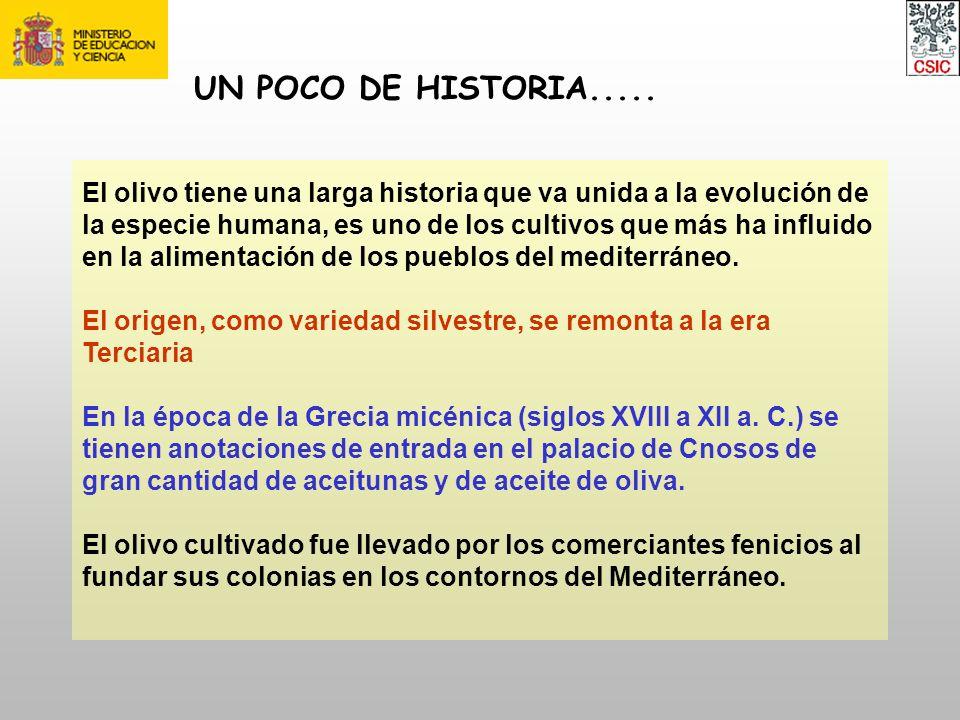 UN POCO DE HISTORIA.....
