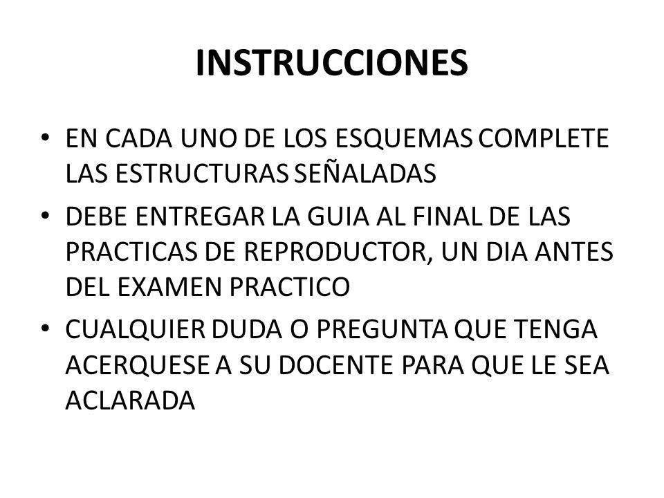 INSTRUCCIONES EN CADA UNO DE LOS ESQUEMAS COMPLETE LAS ESTRUCTURAS SEÑALADAS.