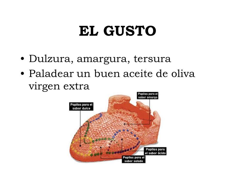 EL GUSTO Dulzura, amargura, tersura