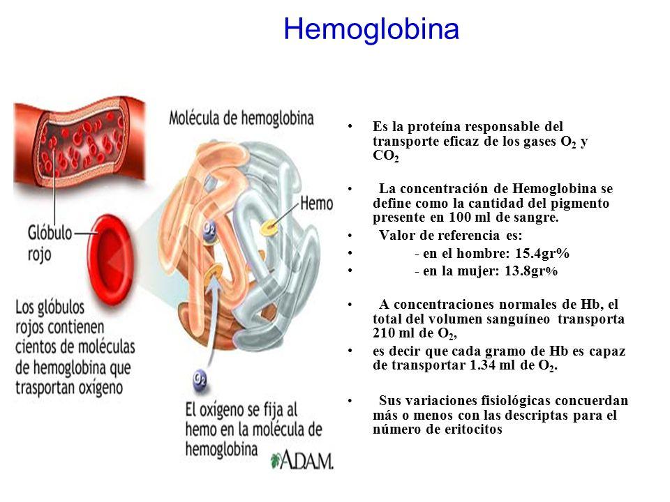 Hemoglobina Es la proteína responsable del transporte eficaz de los gases O2 y CO2.