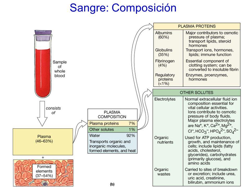 Sangre: Composición