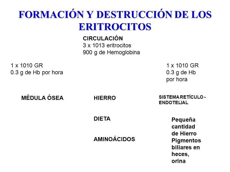FORMACIÓN Y DESTRUCCIÓN DE LOS ERITROCITOS